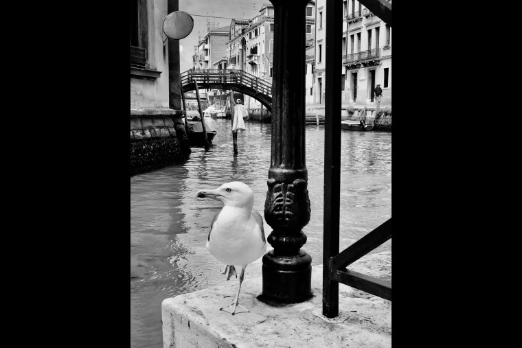 Venezia Biennale 2020